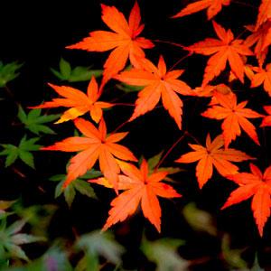 秋に聴きたい歌