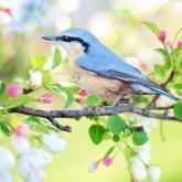 「春を感じる歌」