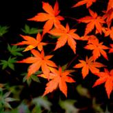 「秋に聴きたい歌」